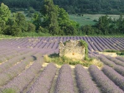 Dovolená v Provence – na statku či venkově